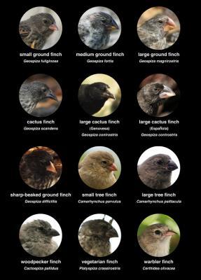 de vinken van Charles Darwin waren gewoon allemaal van het soort 'vink'