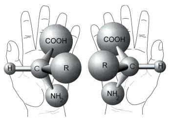 links en rechts handige aminozuren