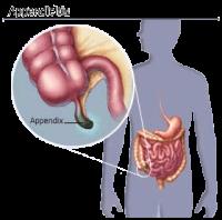 appendix of de blinde darm wordt gebruikt voor het afweersysteem van een mens en is dus niet rudimentair