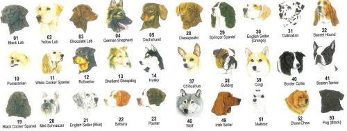 ook onder de hond kennen we veel variatie