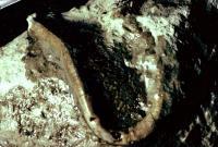 gefossiliseerde worm laat zien dat fossielen snel kunnen vormen