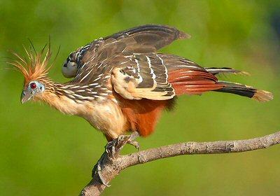 Moderne vogel met klauwen