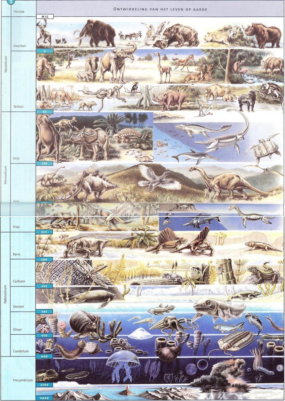 pagina 238-239 biologie voor jou 3vmbo