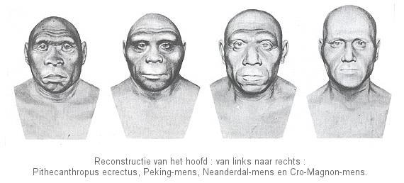 reconstructies van de primitieve mens