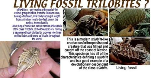 trilobieten leven nog steeds