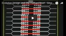Evolution Design and The Human Heart - George Marshall