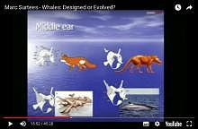 Marc Surtees - Whales:  Designed or Evolved?